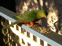 Parrot visit